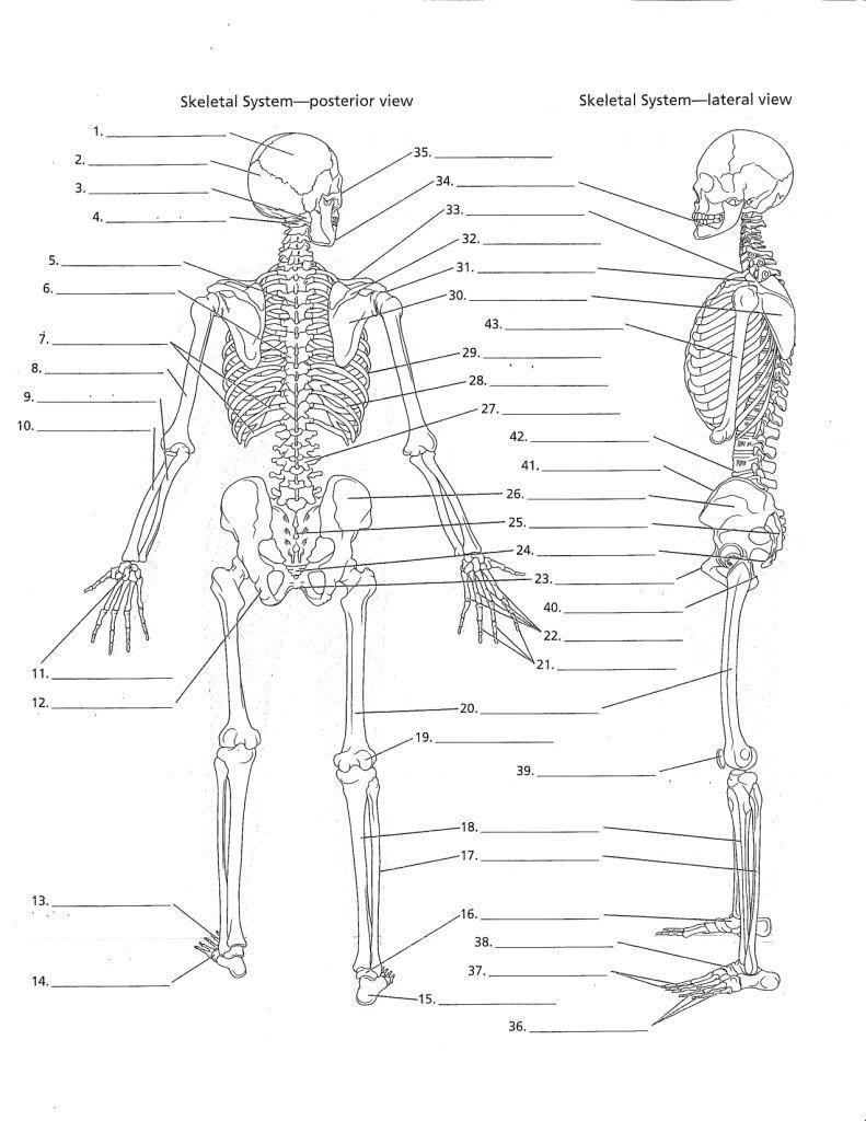 Printable Anatomy Labeling Worksheets Anatomy Labeling Worksheets Google Search มีรูปภาพ