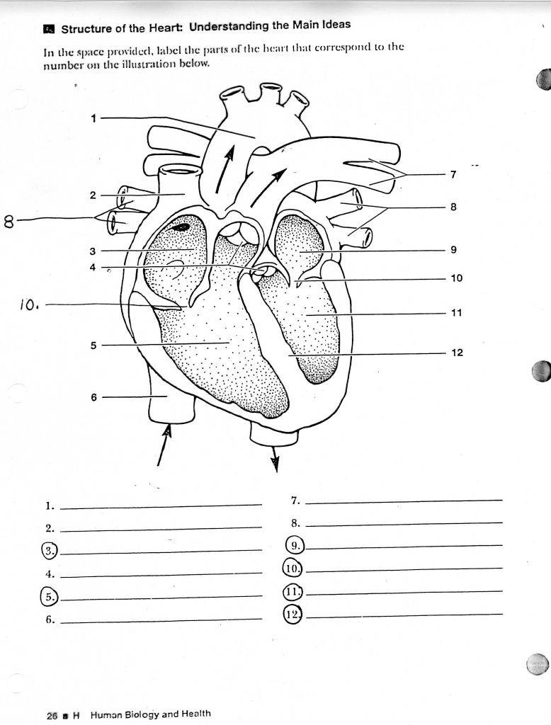 Printable Anatomy Labeling Worksheets Biology Worksheets for High School Science