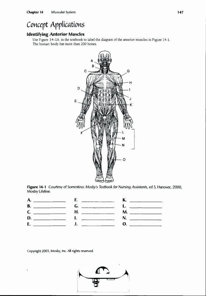 Printable Anatomy Labeling Worksheets Printable Anatomy Labeling Worksheets Inspirational Funky