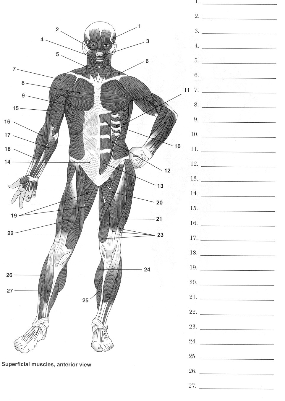 Printable Anatomy Worksheets 6 Best Of Printable Worksheets Muscle Anatomy Blank