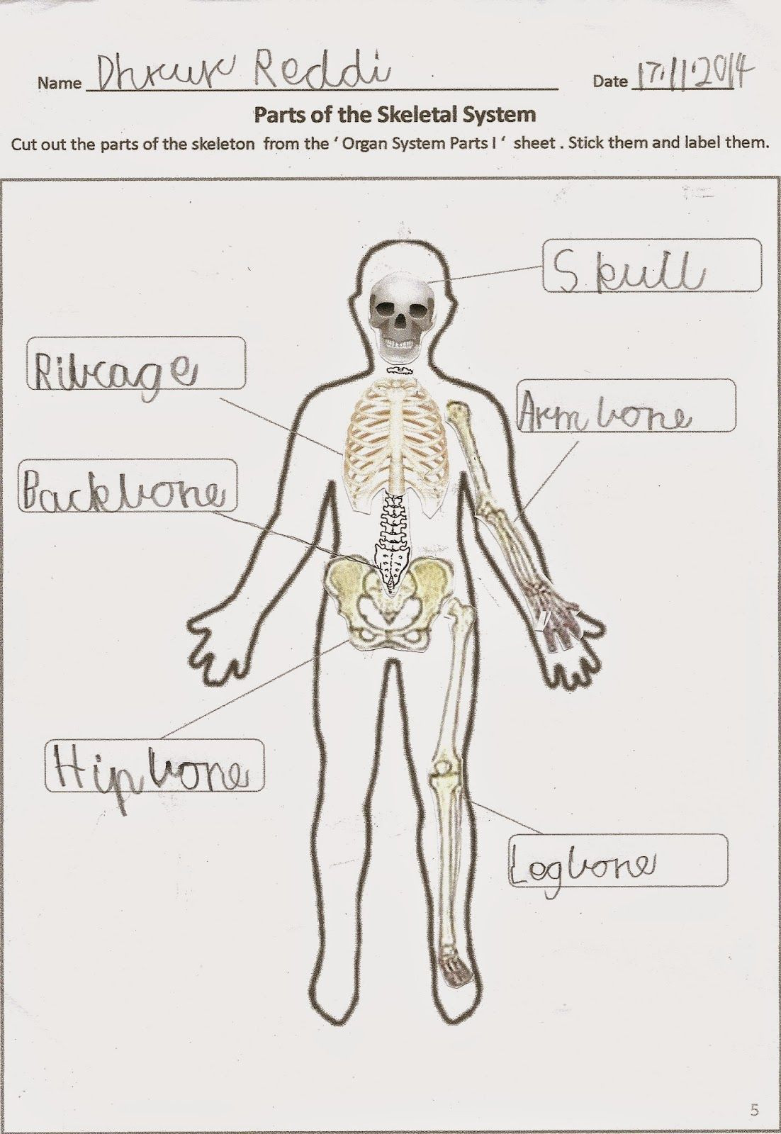 Printable Anatomy Worksheets Human Body organ Systems