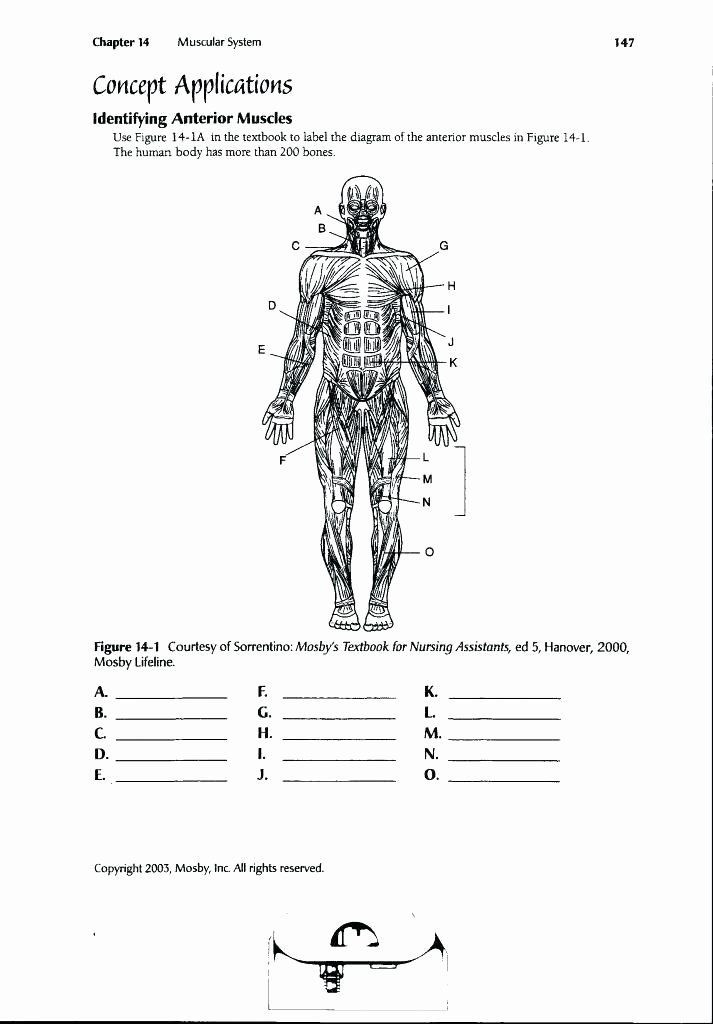 Printable Anatomy Worksheets Printable Anatomy Labeling Worksheets Inspirational Funky