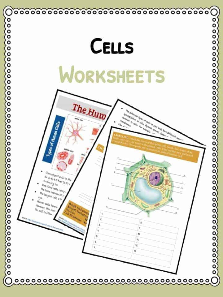 Printable Cell Worksheets Cell Facts Information & Worksheet