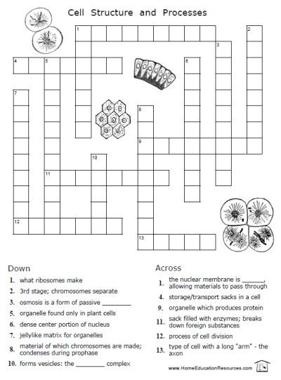 Printable Cell Worksheets Cellsworksheets2 400—541 Pixels