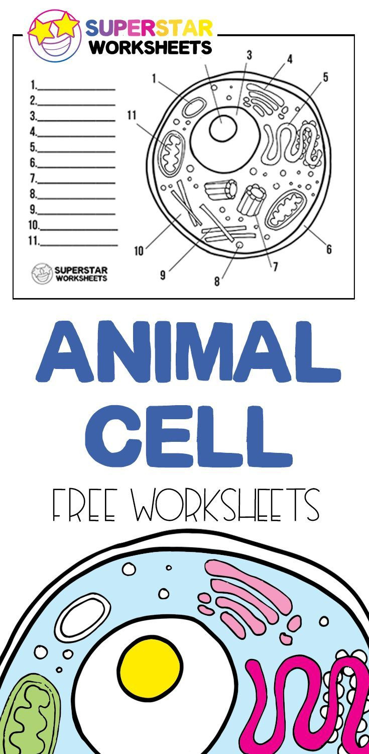 Printable Cell Worksheets Free Printable Cell Worksheets for Coloring Pages Label the