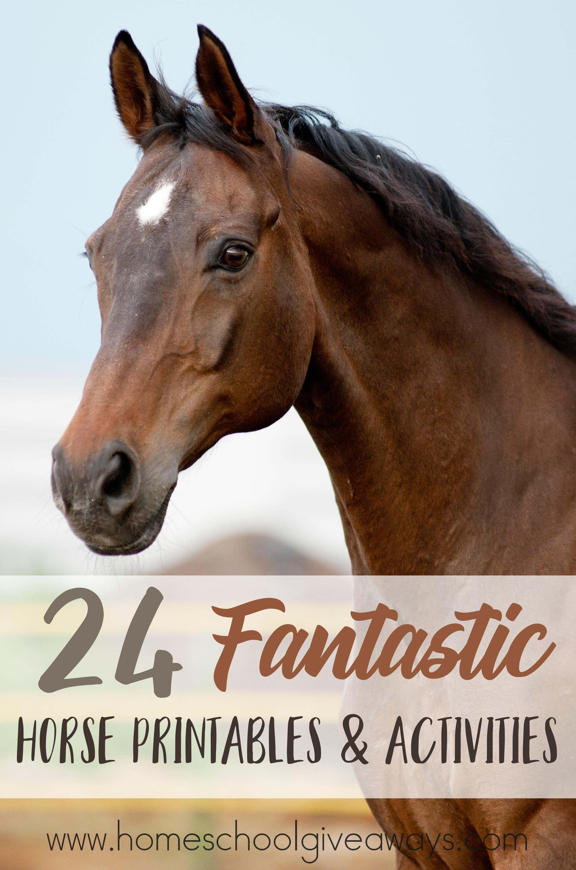 Printable Horse Anatomy Worksheets 24 Fantastic Horse Printables & Activities Homeschool