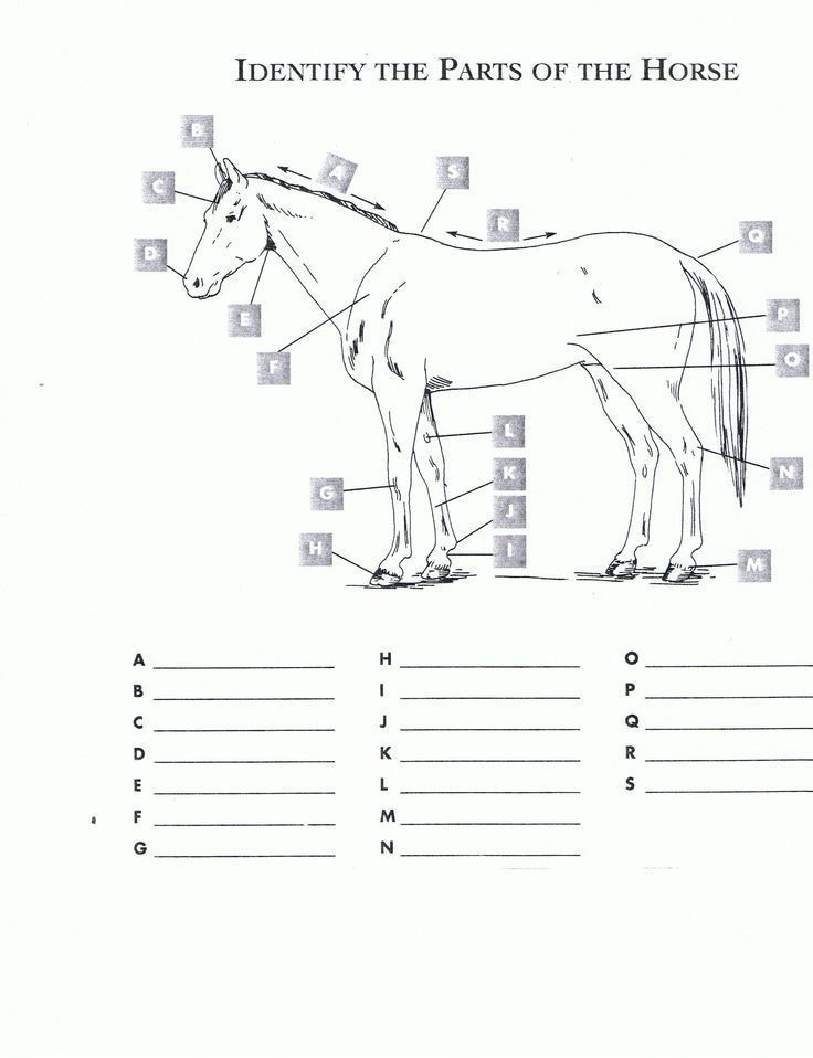 Printable Horse Anatomy Worksheets Free Printable Horse Worksheets Red
