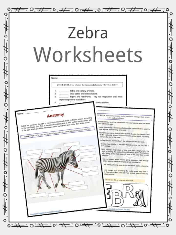 Printable Horse Anatomy Worksheets Zebra Facts Worksheets Species & Habitat Information for Kids