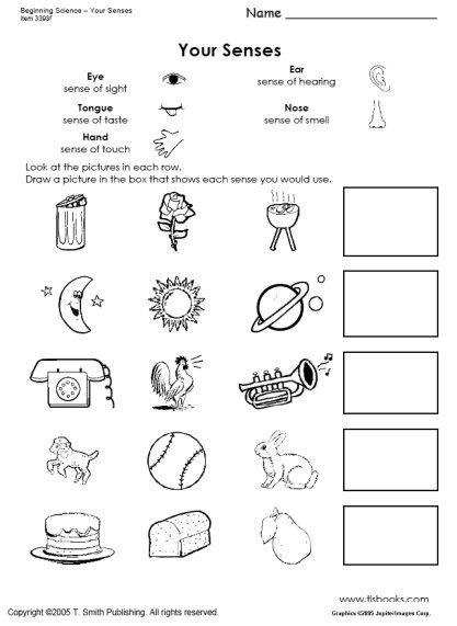 Science Worksheet First Grade Beginning Science Unit About Your Five Senses