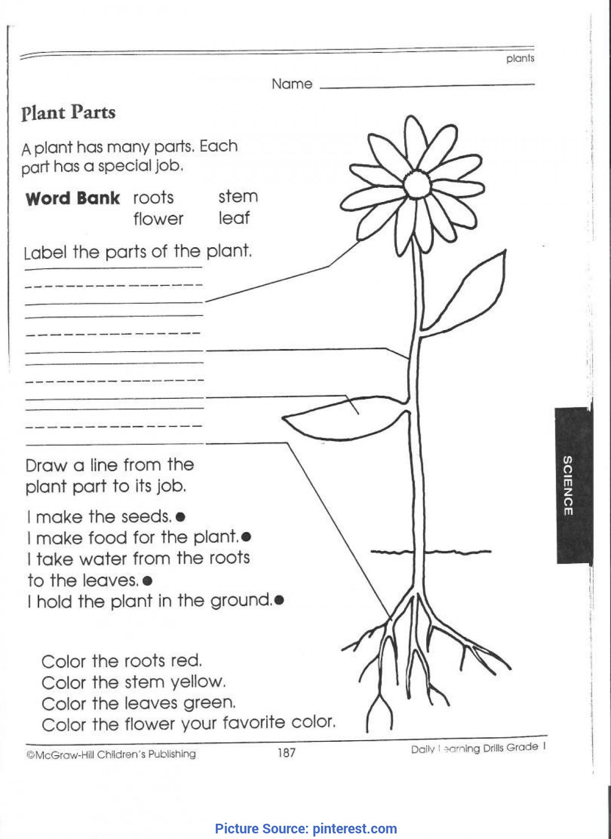 Science Worksheet First Grade Best Third Grade Science Activities 1st Worksheets Plant for