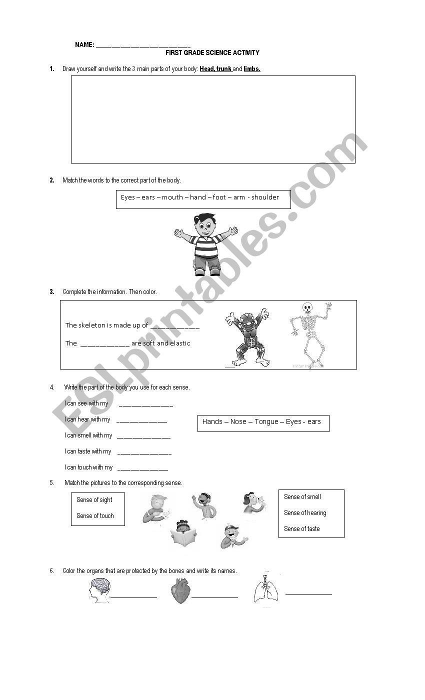 Science Worksheet First Grade First Grade Science Worksheet Esl Worksheet by Anpamaji