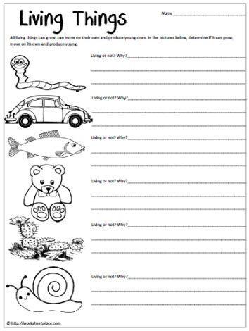 Science Worksheet First Grade Living Things Worksheet