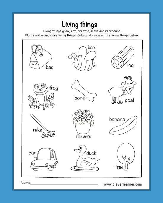 Science Worksheets for Kindergarten Free Am I Living Worksheets for Kindergarten Livingthings