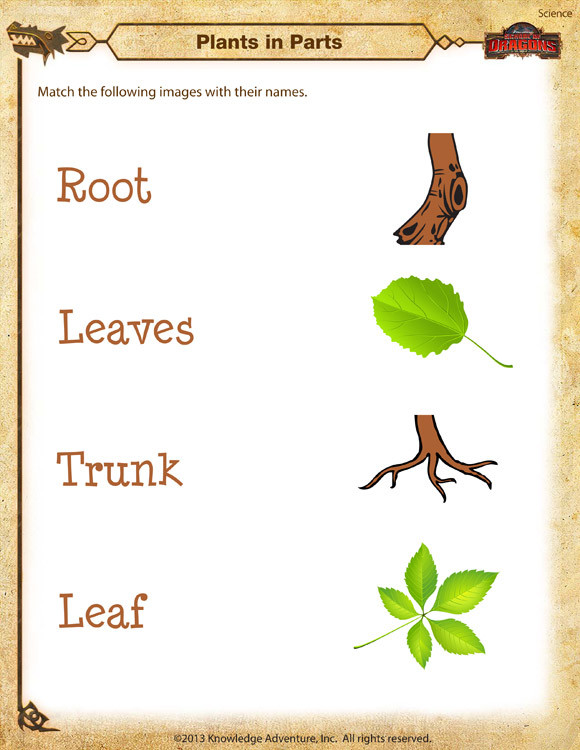 Science Worksheets for Kindergarten Free Plants In Parts Worksheet – Kindergarten Science Printable – sod