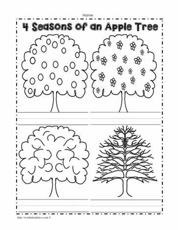 Seasons Worksheets Kindergarten An Apple Tree In 4 Seasons Worksheets