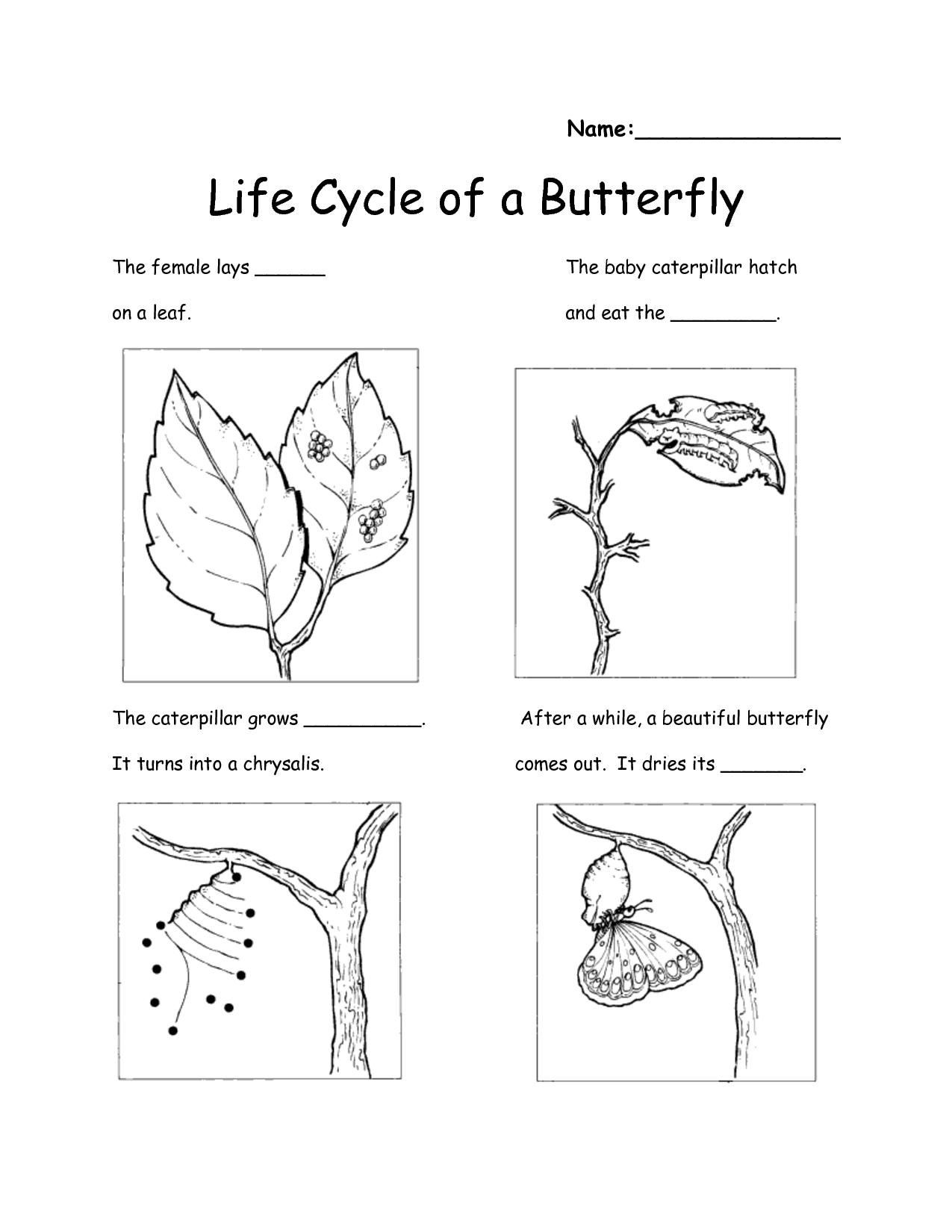Second Grade Science Worksheets Free Free Printable Worksheets for Science 2nd Grade