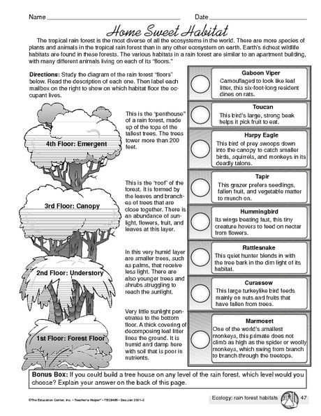2nd Grade Habitat Worksheets Rainforest Home Sweet Habitat Worksheet Mailbox