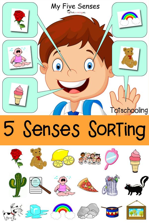 5 Senses Worksheets Preschool Five Senses sorting Printable