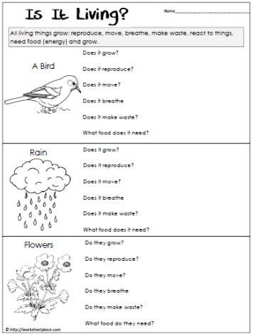 6th Grade Science Worksheets Living or Non Living Worksheet