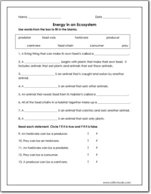 Energy Worksheets for 3rd Grade Energy In An Ecosystem Worksheet