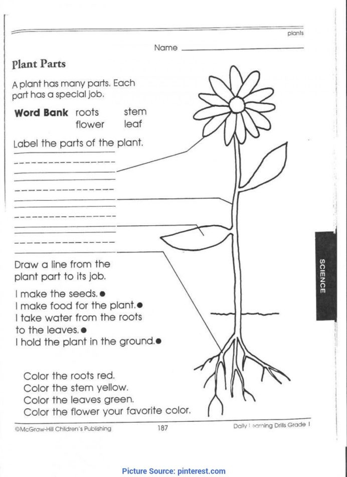 Free 7th Grade Science Worksheets Best Third Grade Science Activities 1st Worksheets Plant for
