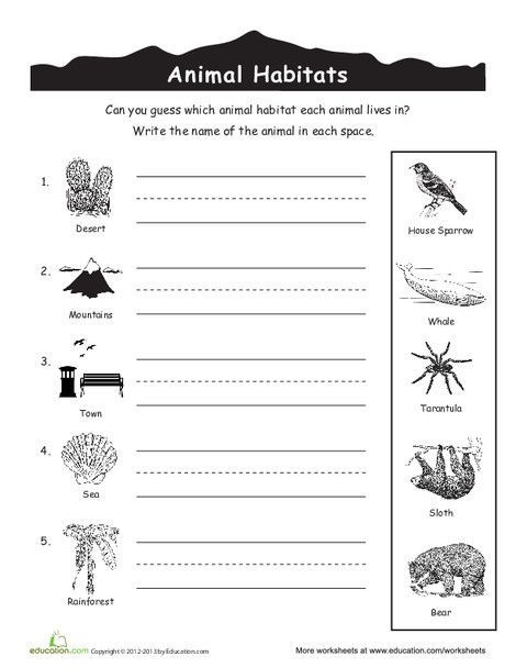 Habitat Worksheets for 1st Grade Animal Habitats for Kids