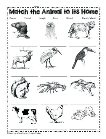 Habitat Worksheets for 1st Grade Animals In their Habitats Worksheets – Keepyourheadup