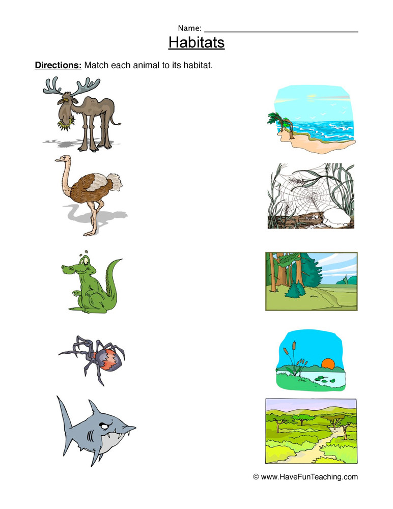 Habitat Worksheets for 1st Grade Matching Animal Habitats Worksheet