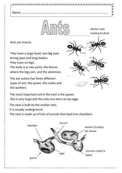 Insect Worksheets for First Grade Ants