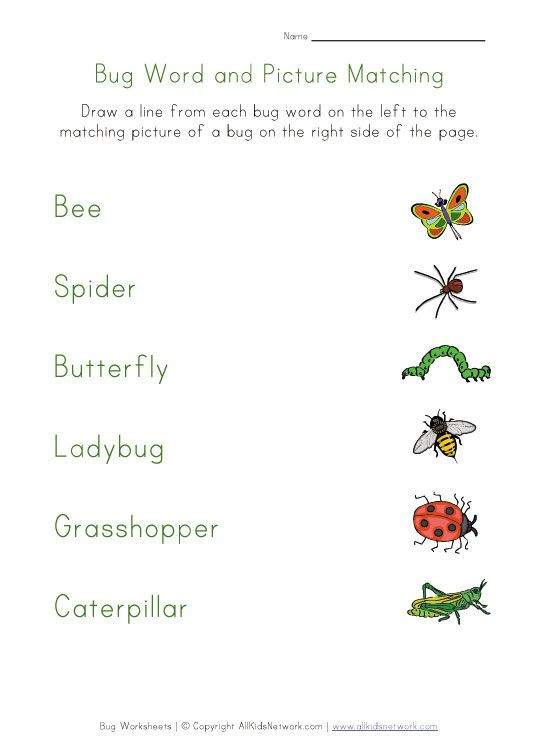 Insect Worksheets for First Grade Bug Matching Worksheet