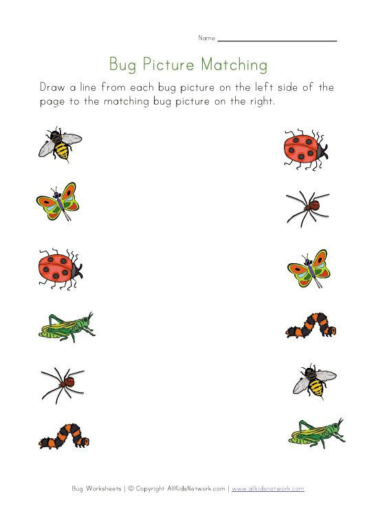 Insect Worksheets for First Grade Bugs Worksheet for Kids Picture Matching