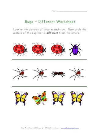 Insect Worksheets for First Grade Bugs Worksheet Recognize Different Insects