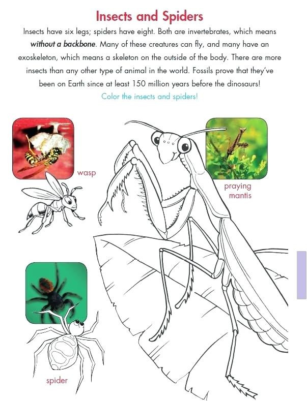 Insect Worksheets for First Grade Free Insect Worksheets – Leter