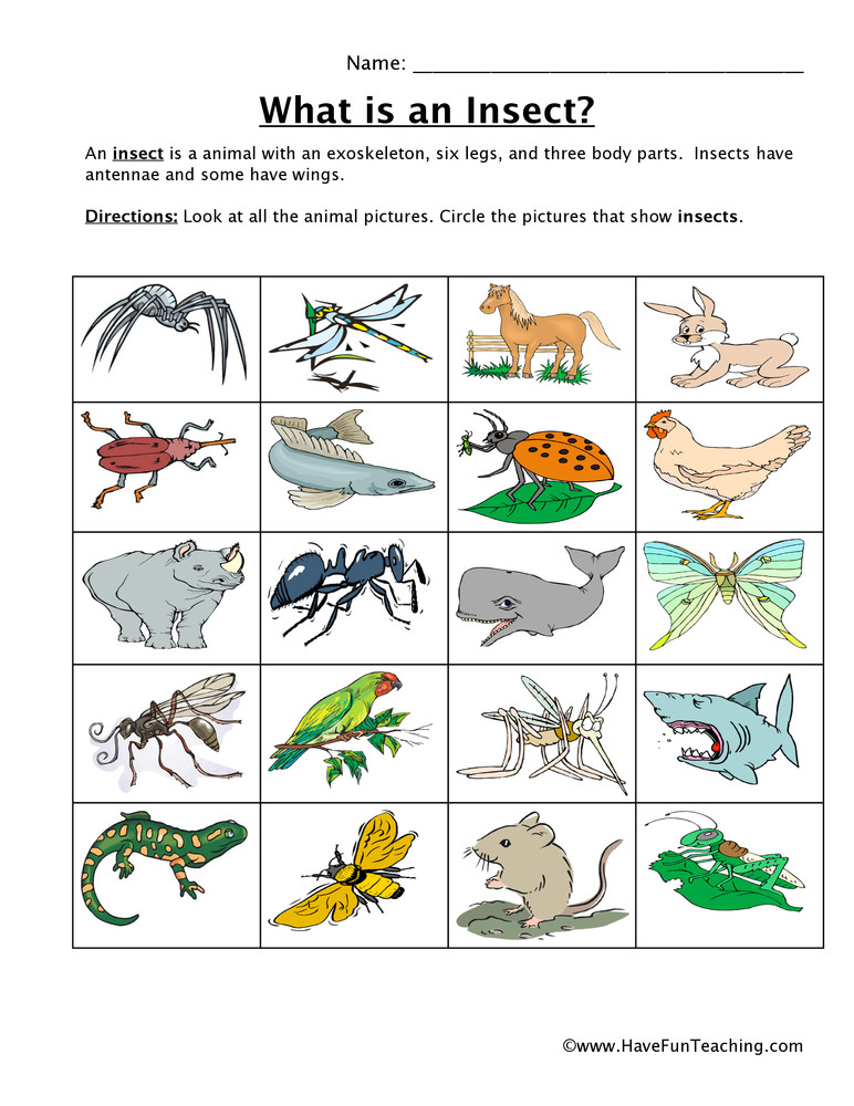 Insect Worksheets for First Grade Insect Classification Worksheet
