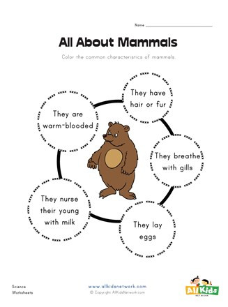 Mammals Worksheet First Grade All About Mammals Worksheet