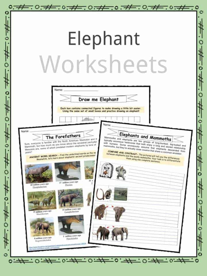 Mammals Worksheet First Grade Elephant Facts Worksheets Habitat and Information for Kids