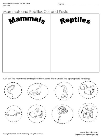 Mammals Worksheet First Grade Mammals and Reptiles Cut and Paste Worksheet