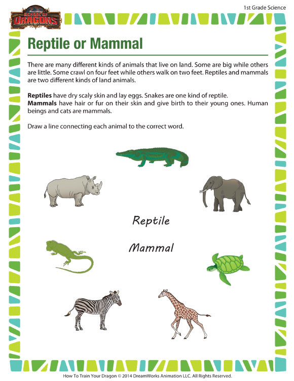 Mammals Worksheet First Grade Reptile or Mammal View – 1st Grade Science Worksheet – sod