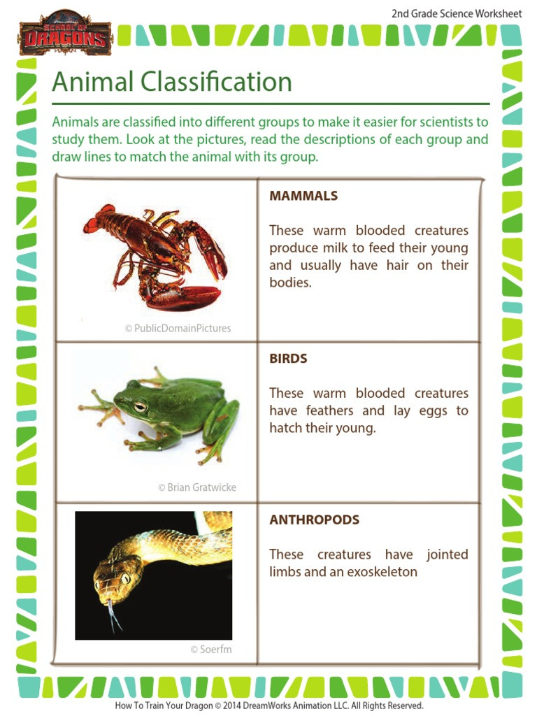 Mammals Worksheets for 2nd Grade Animal Classification 2nd Grade