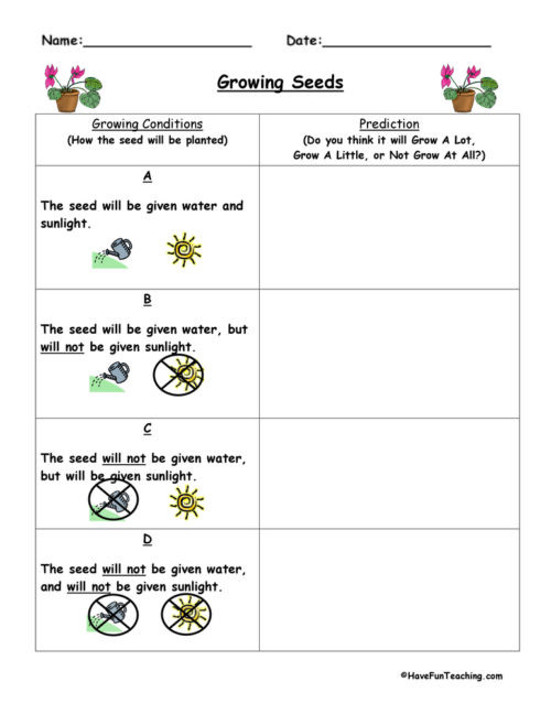 Prediction Worksheets 2nd Grade Predictions Worksheets • Have Fun Teaching