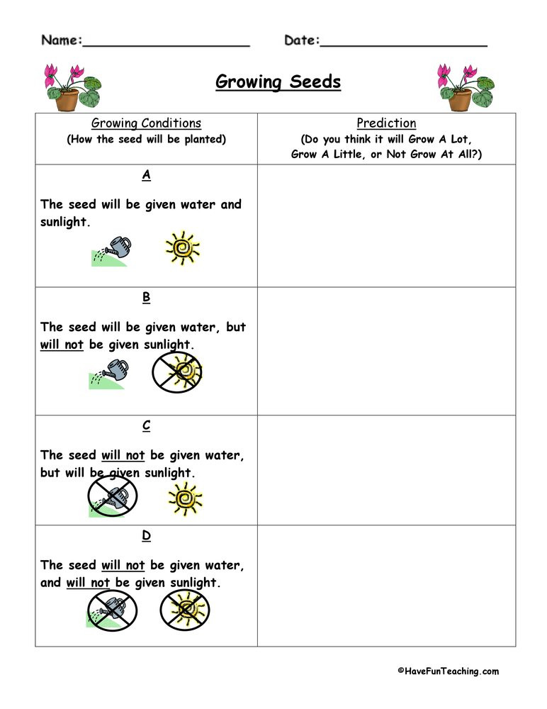 Predictions Worksheets 1st Grade Plant Predict and Infer Worksheet