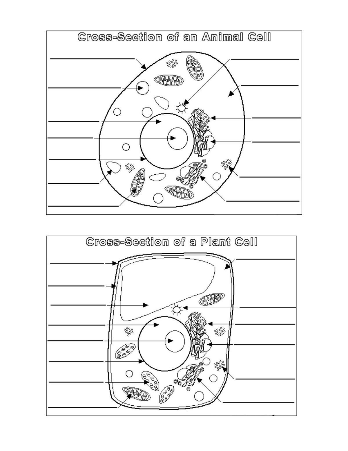 Printable Animal Cell Diagram Plant and Animal Cell Diagrams มีรูปภาพ