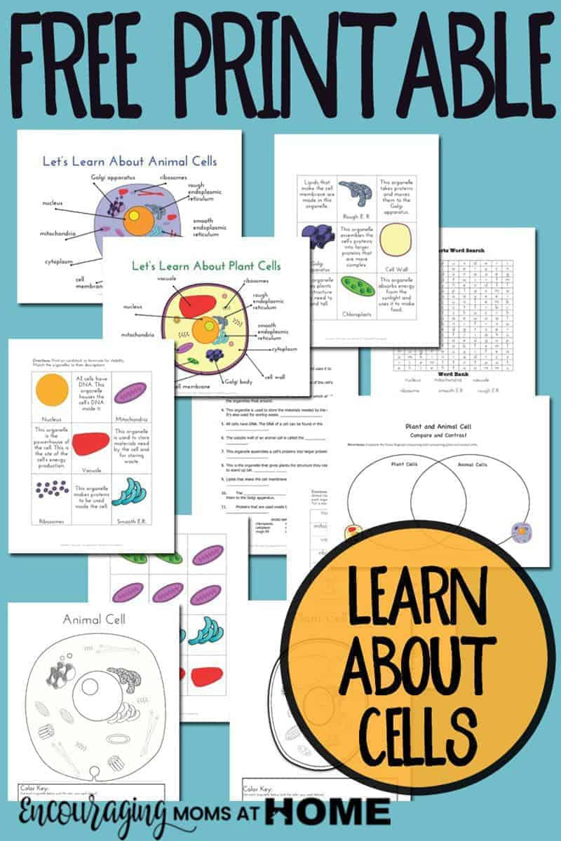 Printable Animal Cell Diagram Plant and Animal Cell Printables Grades 4 6