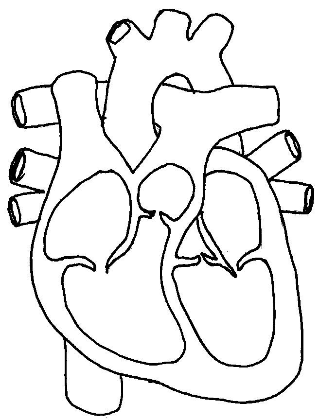 Printable Heart Diagram Ffacessorios Heart Diagram with No Labels