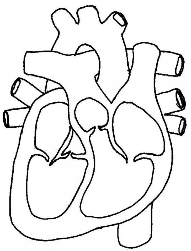 Printable Heart Diagram Free Blank Heart Diagram Clip Art Printable Anatomy